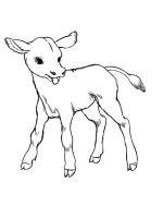 Calf-coloring-pages-13
