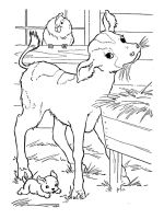 Calf-coloring-pages-18