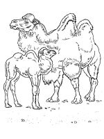 Camel-animal-coloring-pages-336