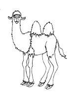 Camel-animal-coloring-pages-338