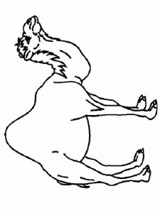 Camel-animal-coloring-pages-344