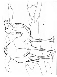 Camel-animal-coloring-pages-347