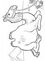Camel-animal-coloring-pages-351