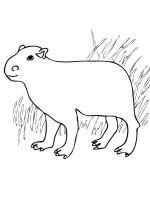 Capybara-coloring-pages-11