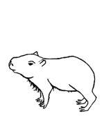 Capybara-coloring-pages-7
