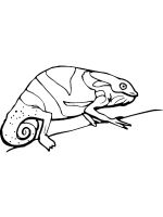 chameleon-coloring-pages-12