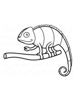 chameleon-coloring-pages-17