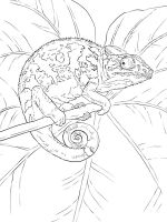 chameleon-coloring-pages-19