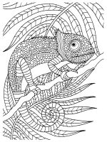 chameleon-coloring-pages-28