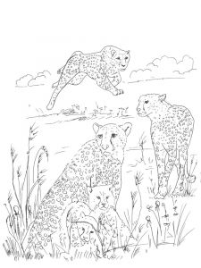 Cheetah-animal-coloring-pages-335