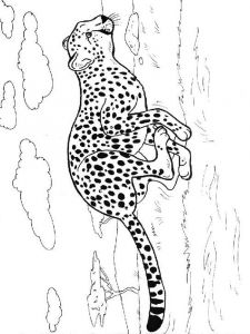 Cheetah-animal-coloring-pages-336