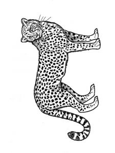 Cheetah-animal-coloring-pages-338