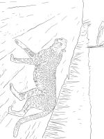 Cheetah-animal-coloring-pages-341