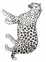 Cheetah-animal-coloring-pages-343