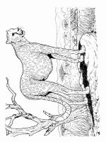 Cheetah-animal-coloring-pages-345