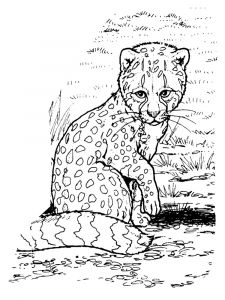 Cheetah-animal-coloring-pages-346