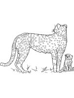 Cheetah-coloring-pages-4