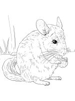 Chinchilla-coloring-pages-10