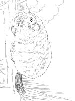 Chinchilla-coloring-pages-14