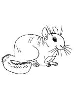 Chinchilla-coloring-pages-2