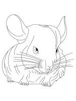 Chinchilla-coloring-pages-5