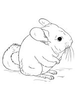 Chinchilla-coloring-pages-7