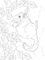 Chinchilla-coloring-pages-9