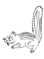 Chipmunk-coloring-pages-11
