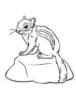 Chipmunk-coloring-pages-4