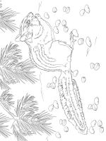 Chipmunk-coloring-pages-5