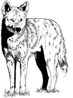 Coyote-coloring-pages-1