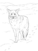Coyote-coloring-pages-11
