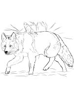 Coyote-coloring-pages-12