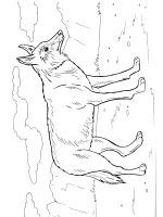 Coyote-coloring-pages-17
