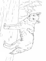 Coyote-coloring-pages-3