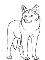 Coyote-coloring-pages-5