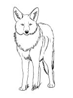 Coyote-coloring-pages-6