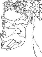 Coyote-coloring-pages-8
