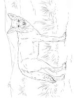 Coyote-coloring-pages-9