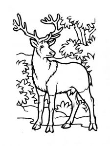 Deer-animal-coloring-pages-344