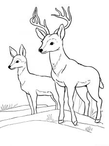 Deer-animal-coloring-pages-347