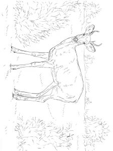 Deer-animal-coloring-pages-348