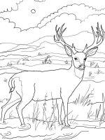 Deer-coloring-pages-1