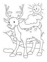 Deer-coloring-pages-11