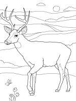 Deer-coloring-pages-12