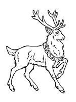 Deer-coloring-pages-8