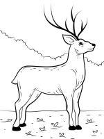 Deer-coloring-pages-9