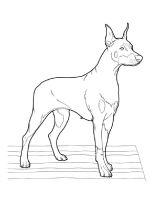 Doberman-coloring-pages-3