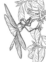 Dragonfly-coloring-pages-14
