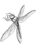 Dragonfly-coloring-pages-15